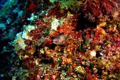 Θαλάσσια ζωή Στοκ φωτογραφία με δικαίωμα ελεύθερης χρήσης