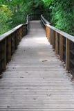 Θαλάσσιος περίπατος μέσω του δάσους Στοκ εικόνα με δικαίωμα ελεύθερης χρήσης