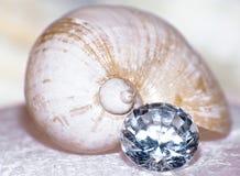 θαλάσσιο πολύτιμο σαλιγκάρι σπιτιών Στοκ Φωτογραφία