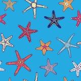 Θαλάσσιο πρότυπο με τον αστερία Ελεύθερη απεικόνιση δικαιώματος