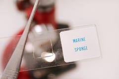 θαλάσσιο σφουγγάρι στοκ φωτογραφία με δικαίωμα ελεύθερης χρήσης