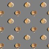 Θαλάσσιο σχέδιο κοχυλιών Στοκ Φωτογραφίες
