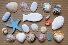 Θαλάσσιο υπόβαθρο, θαλασσινά κοχύλια Στοκ φωτογραφία με δικαίωμα ελεύθερης χρήσης