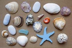 Θαλάσσιο υπόβαθρο, θαλασσινά κοχύλια Στοκ Εικόνα