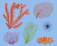Θαλάσσιο φύκι εγκαταστάσεων φυτική ζωή και τρόφιμα για τα ψάρια διανυσματική απεικόνιση