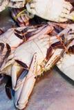 θαλασσινά αγορών στοκ εικόνες