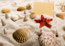 θαλασσινά κοχύλια άμμου πλαισίων Στοκ Φωτογραφία