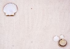 θαλασσινά κοχύλια ανασκ στοκ εικόνα