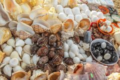 Θαλασσινά κοχύλια και κοράλλια που επιδεικνύονται για την πώληση, παραλία μαρινών, Chennai, Ινδία, στις 19 Αυγούστου 2017 Στοκ φωτογραφία με δικαίωμα ελεύθερης χρήσης