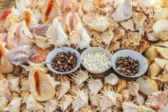 Θαλασσινά κοχύλια και κοράλλια που επιδεικνύονται για την πώληση, παραλία μαρινών, Chennai, Ινδία, στις 19 Αυγούστου 2017 Στοκ εικόνες με δικαίωμα ελεύθερης χρήσης
