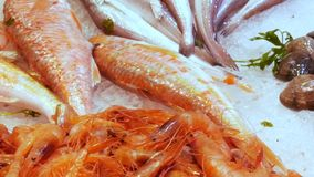 Θαλασσινά κοχύλια μυδιών στρειδιών αστακών γαρίδων καλαμαριών αστακών καβουριών θαλασσινών στην αγορά ψαριών στο Λα Boqueria Ισπα απόθεμα βίντεο