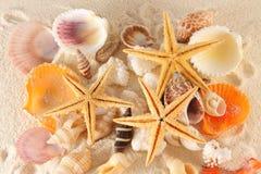 θαλασσινά κοχύλια ομάδας Στοκ εικόνα με δικαίωμα ελεύθερης χρήσης