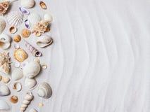 θαλασσινά κοχύλια παραλ Στοκ φωτογραφία με δικαίωμα ελεύθερης χρήσης