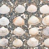 Θαλασσινά κοχύλια στα χαλίκια μιας υποβάθρου θάλασσας Στοκ Φωτογραφίες