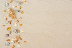 Θαλασσινά κοχύλια στην άμμο Υπόβαθρο θερινών διακοπών θάλασσας με το διάστημα για το κείμενο στοκ φωτογραφία