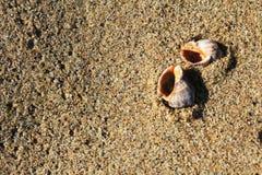 Θαλασσινά κοχύλια στην αμμώδη παραλία στην παραλία Μαύρης Θάλασσας σε Obzor, Βουλγαρία Στοκ εικόνα με δικαίωμα ελεύθερης χρήσης