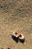 Θαλασσινά κοχύλια στην αμμώδη παραλία στην παραλία Μαύρης Θάλασσας σε Obzor, Βουλγαρία Στοκ Εικόνα