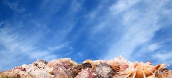 Θαλασσινά κοχύλια στην ανασκόπηση ουρανού Στοκ εικόνα με δικαίωμα ελεύθερης χρήσης