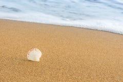 Θαλασσινά κοχύλια στην παραλία 16 Στοκ φωτογραφία με δικαίωμα ελεύθερης χρήσης