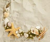 θαλασσινά κοχύλια συλ&lambda Στοκ Εικόνα