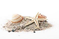 θαλασσινά κοχύλια Στοκ Εικόνα