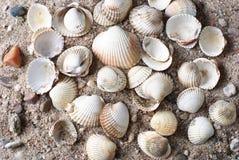 θαλασσινά κοχύλια Στοκ φωτογραφίες με δικαίωμα ελεύθερης χρήσης