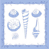 θαλασσινά κοχύλια Στοκ Εικόνες