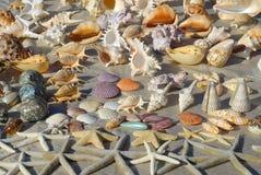θαλασσινά κοχύλια Στοκ Φωτογραφία