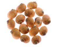 θαλασσινά κοχύλια Στοκ εικόνα με δικαίωμα ελεύθερης χρήσης