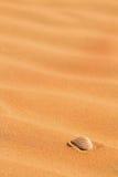 θαλασσινό κοχύλι άμμου π&alpha Στοκ φωτογραφία με δικαίωμα ελεύθερης χρήσης