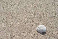 θαλασσινό κοχύλι άμμου Στοκ Φωτογραφία
