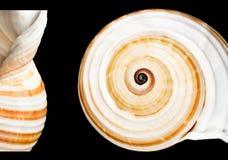 θαλασσινό κοχύλι ανασκόπ& Στοκ Εικόνες