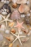 θαλασσινό κοχύλι ανασκόπ& Στοκ φωτογραφίες με δικαίωμα ελεύθερης χρήσης