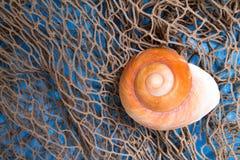 θαλασσινό κοχύλι διχτίο&upsi Στοκ Εικόνες