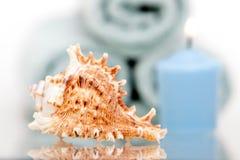 θαλασσινό κοχύλι κεριών στοκ εικόνα
