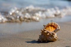 θαλασσινό κοχύλι παραλιώ στοκ φωτογραφίες με δικαίωμα ελεύθερης χρήσης