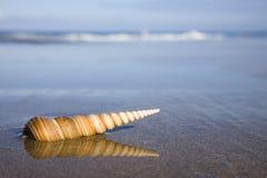 θαλασσινό κοχύλι παραλιώ στοκ φωτογραφία με δικαίωμα ελεύθερης χρήσης