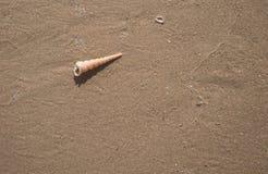 Θαλασσινό κοχύλι στην άμμο της θερινής παραλίας Στοκ Εικόνες