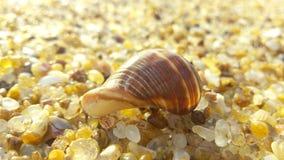 Θαλασσινό κοχύλι στην ακτή στοκ φωτογραφία με δικαίωμα ελεύθερης χρήσης
