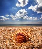 Θαλασσινό κοχύλι στην παραλία άμμου Στοκ Εικόνα
