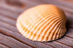 Θαλασσινό κοχύλι στο ξύλινο υπόβαθρο στενό Στοκ εικόνες με δικαίωμα ελεύθερης χρήσης