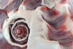 θαλασσινό κοχύλι τεμαχίω στοκ φωτογραφίες