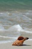 θαλασσινό κοχύλι Στοκ Φωτογραφία