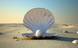 θαλασσινό κοχύλι ελεύθερη απεικόνιση δικαιώματος