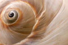θαλασσινό κοχύλι Στοκ φωτογραφίες με δικαίωμα ελεύθερης χρήσης