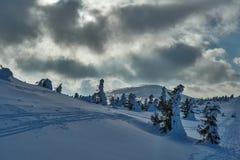 Θαμμένος στο δάσος χιονιού στοκ φωτογραφίες