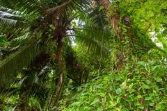 Θαμνώδεις ζούγκλες στις Σεϋχέλλες στοκ φωτογραφία