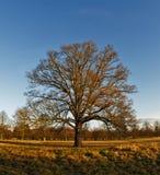 θαμνώδης χειμώνας πάρκων στοκ φωτογραφία με δικαίωμα ελεύθερης χρήσης