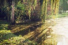 Θαμνώδης ιτιά πέρα από τη λίμνη το φθινόπωρο στοκ φωτογραφία με δικαίωμα ελεύθερης χρήσης