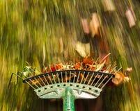 Θαμπάδα κινήσεων στα πράσινα φύλλα τσουγκρανών χορτοταπήτων Στοκ Εικόνες